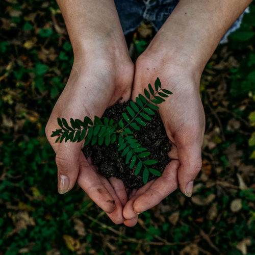 hands holding plant in dirt earth day 2020